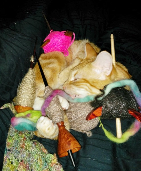 Cat covered in spindles