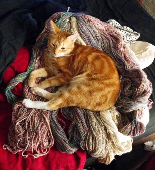 Handspun yarn and cat