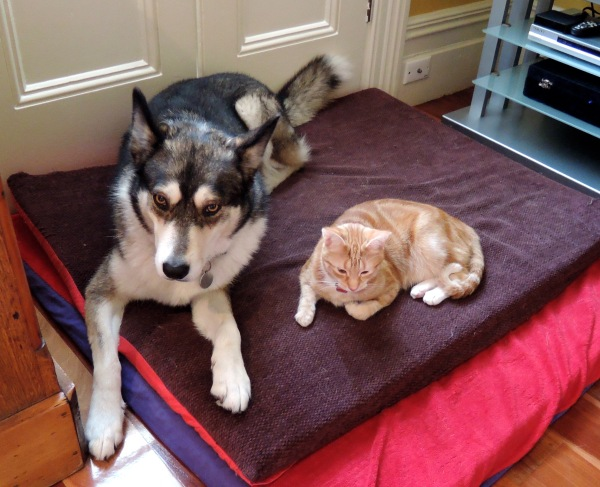 Dog with cat friend 6952